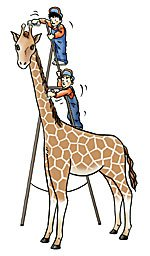 comment coiffer une girafe